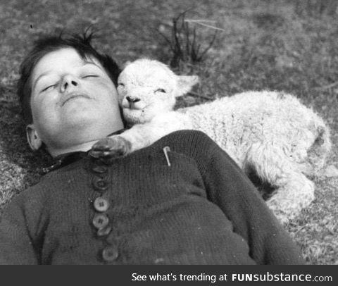 A baby lamb laying down with the second most deadly animal in the known universe, circa