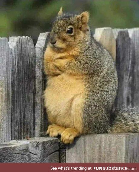 A squirrel named Karen