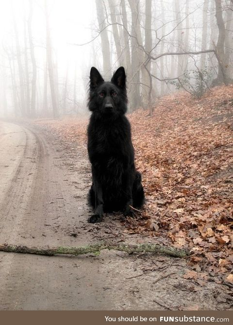 The blood red eyes of a black hound