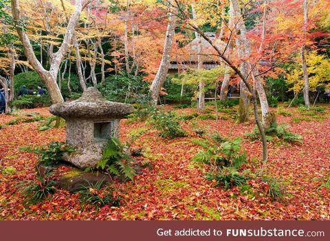 Autumn leaf carpet at Gio-ji Temple