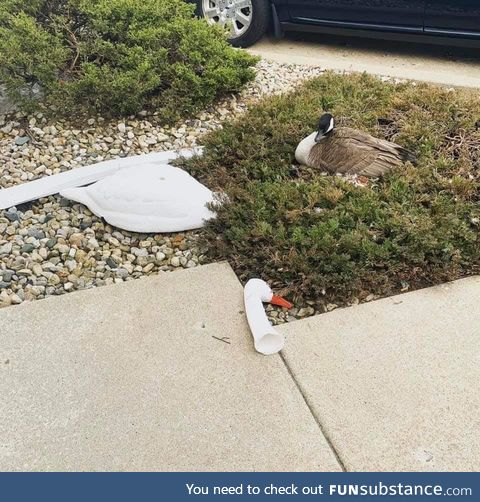 Tried to use a decoy to send a message. The goose received it and sent one back