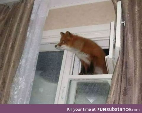 Firefox Windows has been successfully installed!