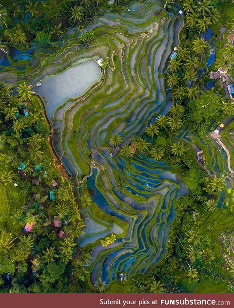 Phenomenal colors of Bali