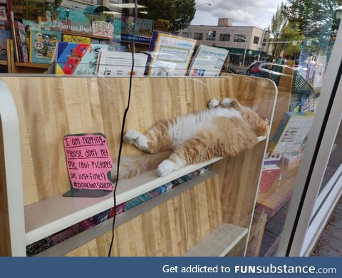 This cat sleeping at the book store