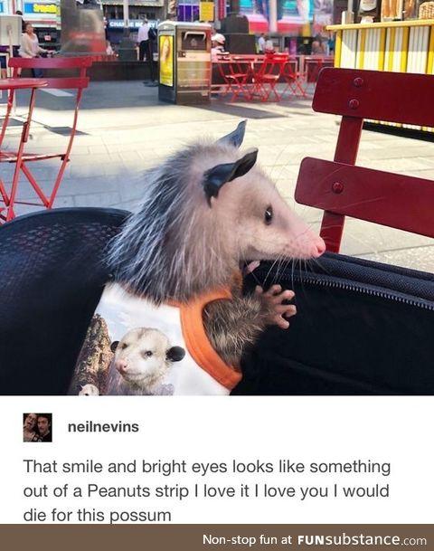 O Possum, My Possum!