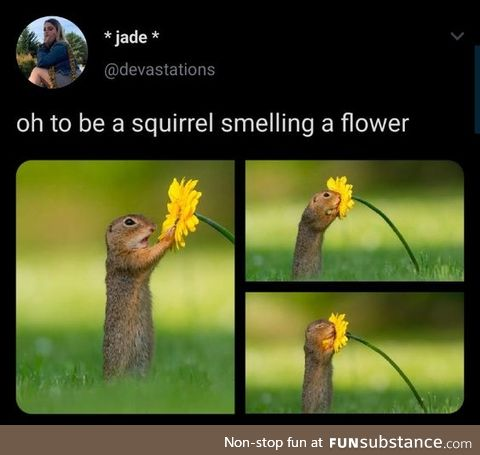 Remember to Smell a Flower Today