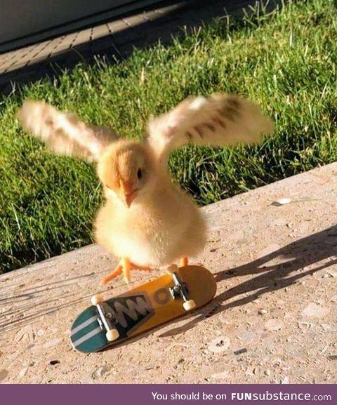 Chicken flip