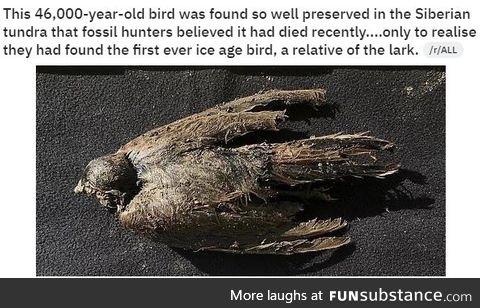 Really old bird