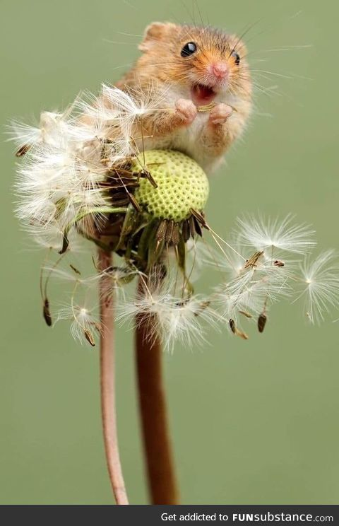 This little guy sitting atop a dandelion