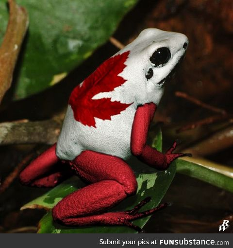 Froggo Fun #192/Special - Happy Canada Day!