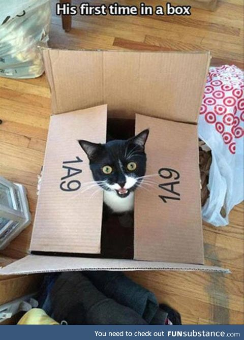 First time inside a box. But it won't be his last