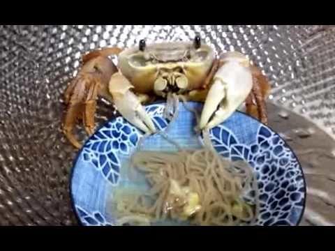Just a pet crab eating noodles