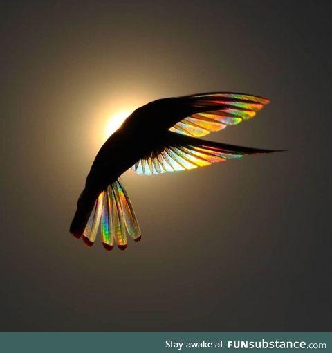 Hummingbird by Christian Spencer