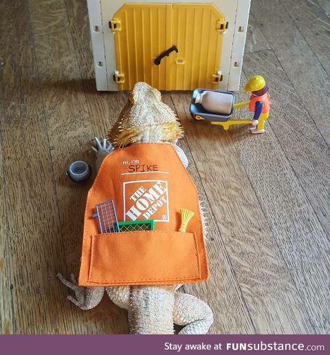 Besides chickens, Home Depot gift card aprons fit lizards too