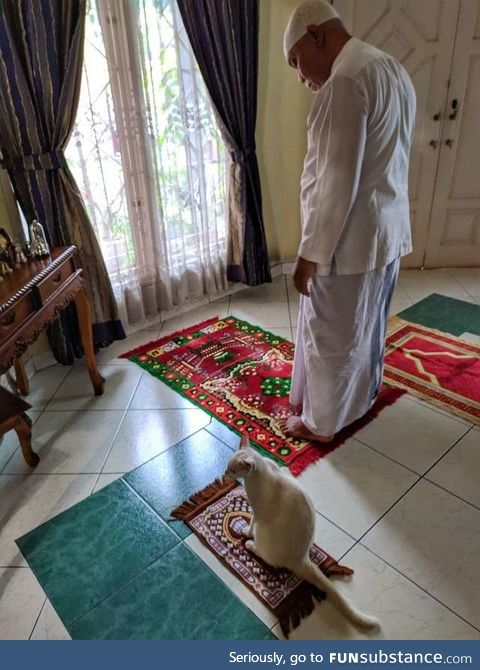 Cat gets her own little rug so she can join her family's prayer time