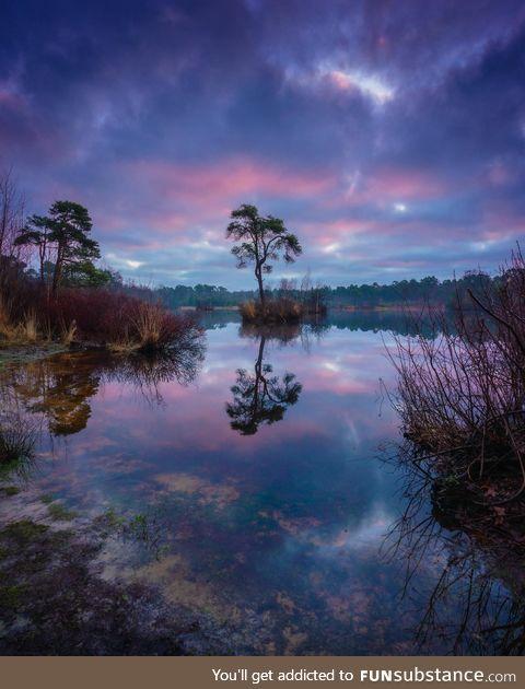 Sunrise at a pond, the Netherlands