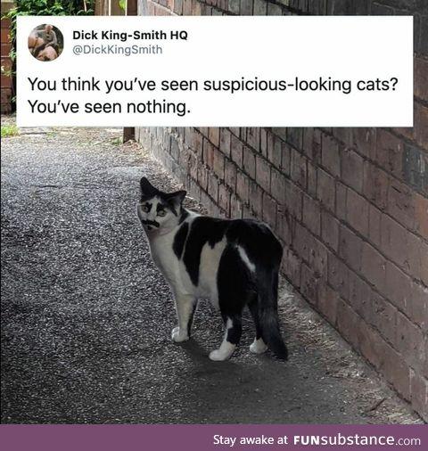 Suspicious meow