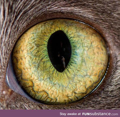 9 lives, cat eye