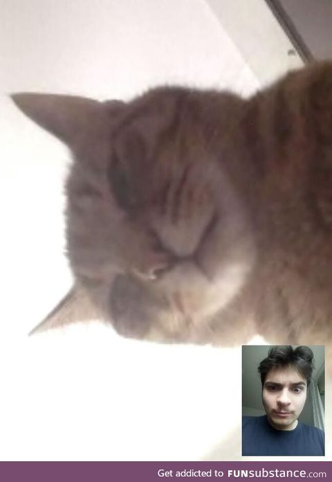 Skype called my father during quarantine, this is what I saw when he picked up