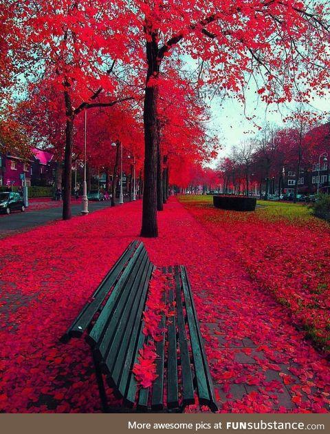 Autumn in Amsterdam ????