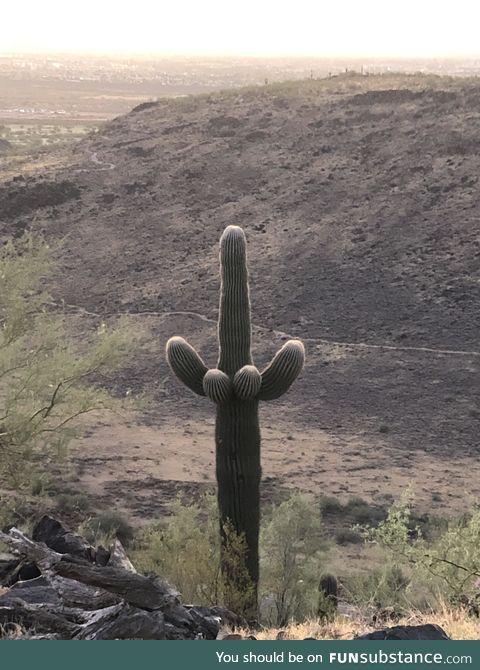Cacti gone wild