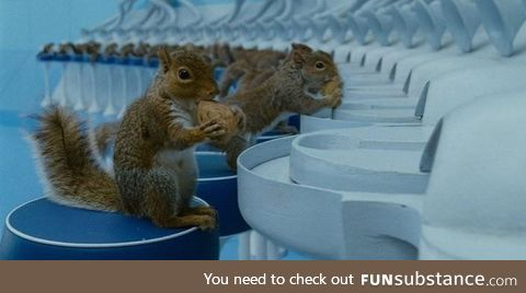 Charlie and the Chocolate Factory had 40 squirrels trained to crack nuts