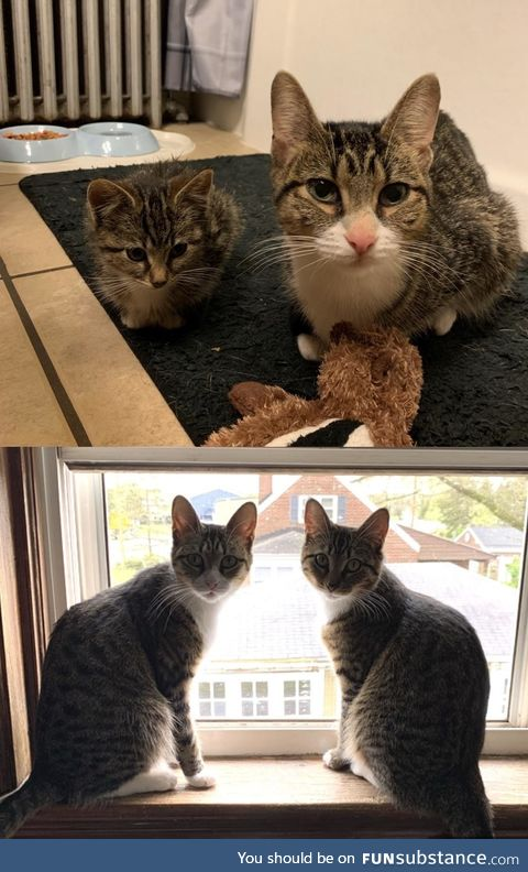 6 month difference, from stray kitties to house kitties