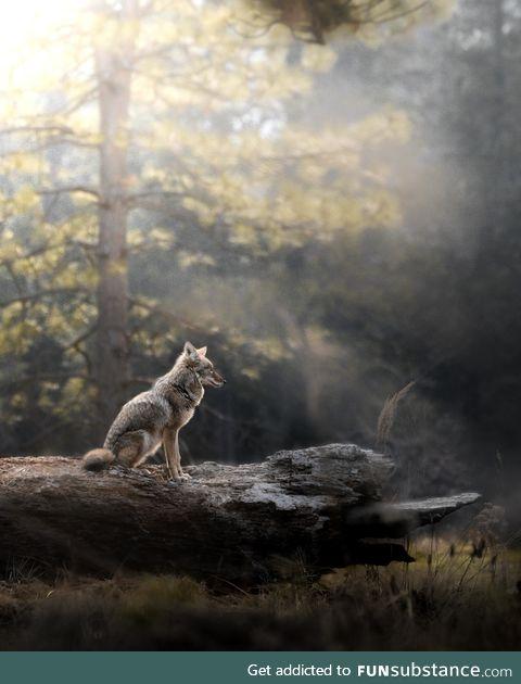 Golden Hour Gazing in Yosemite National Park
