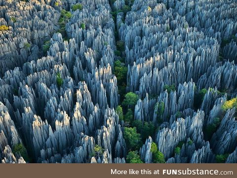 The Stone Forest in Madagascar