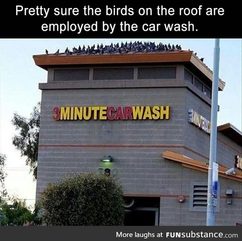 Bird:Time to wash your car