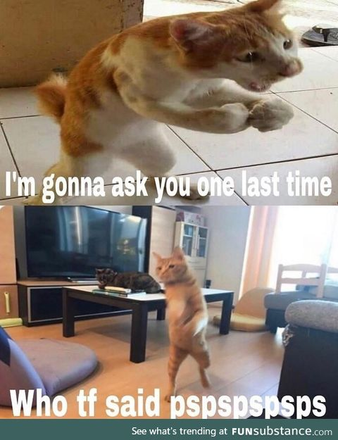 Why mess with such an alpha cat