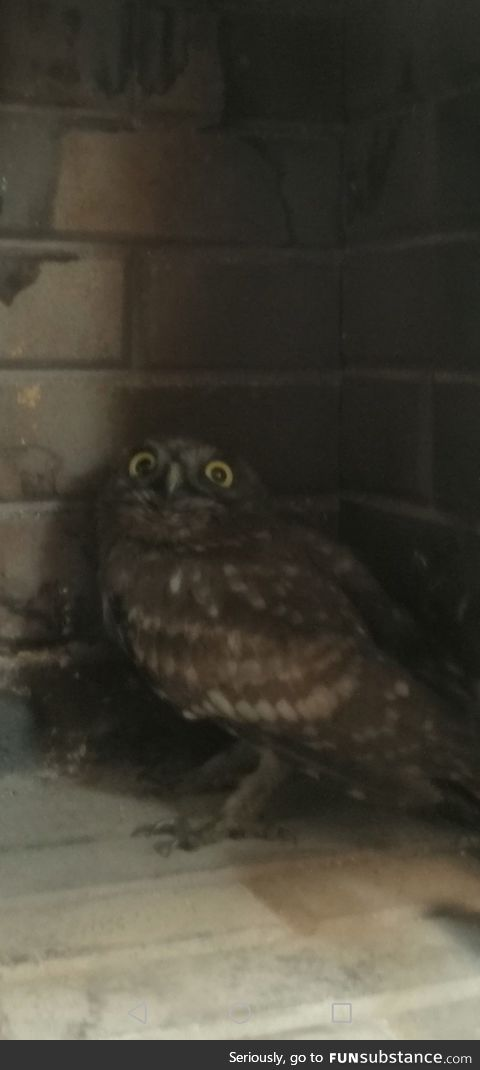 Lets make this owl a meme