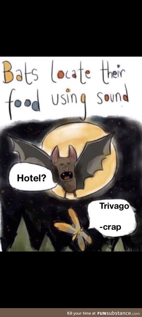 Even the bat has got tricks