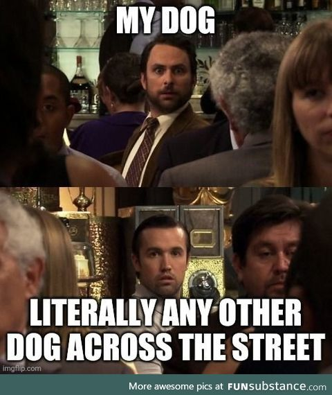 Dog ownership in a nutshell
