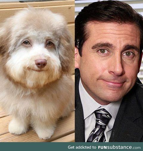 This dog looks like Steve Carell