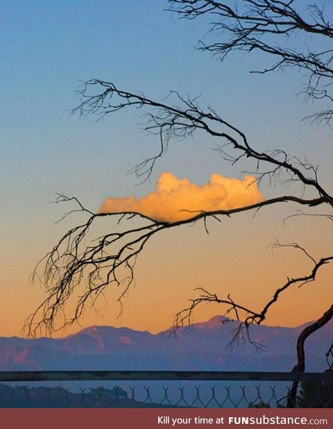 A cloud on a branch