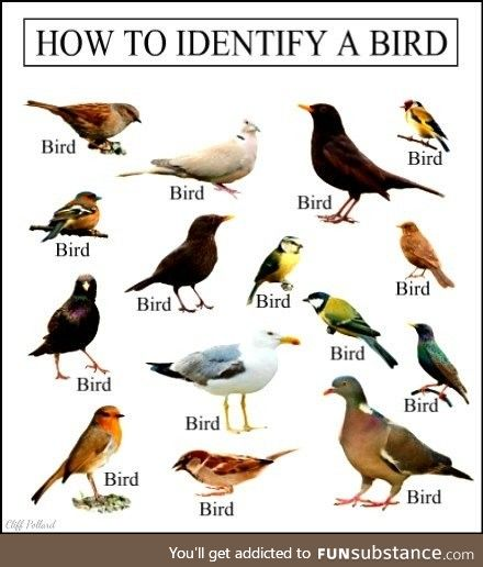 Learn some birb