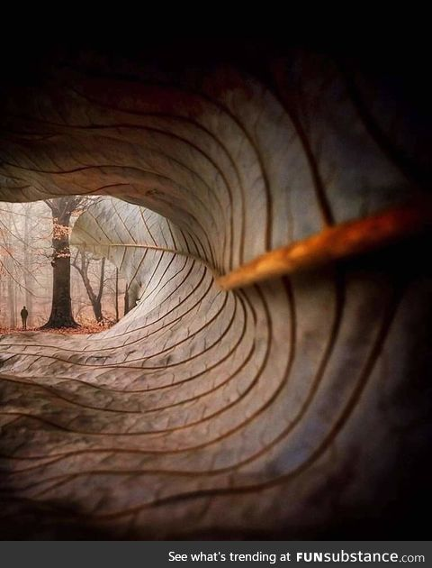 Through the lens of a fallen leaf! ???? Photo by William Smith