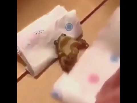 Froggo Fun #268 - Bedtime