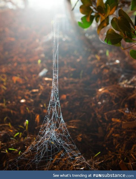 A spider web that looks like a tiny Eiffel tower