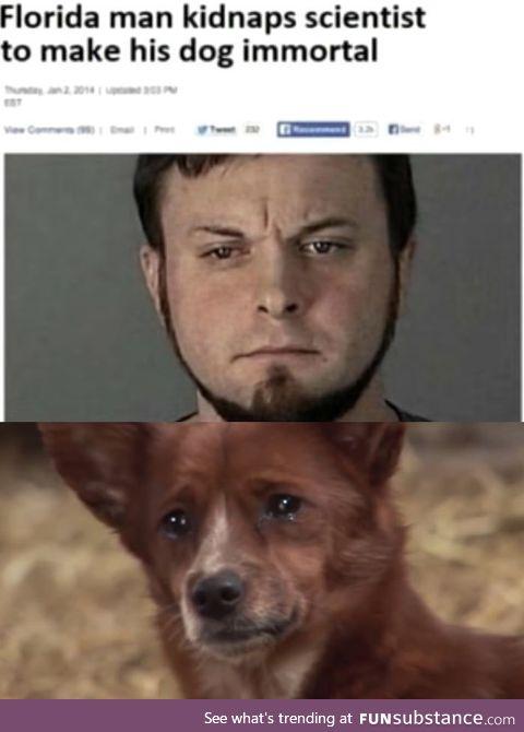 The hero dogs deserve