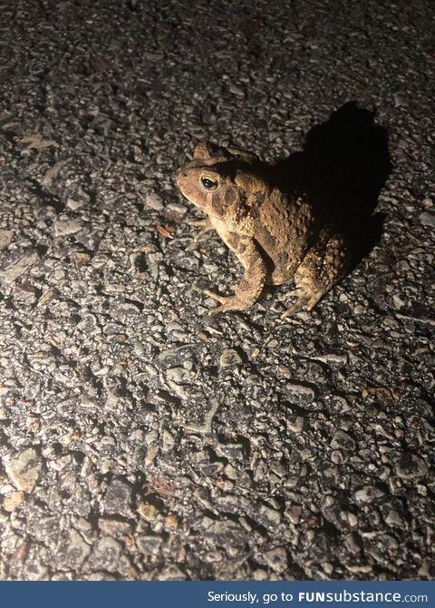 Froggo Fun #274 - Toad on the Road