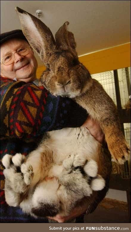 Herman the Lop