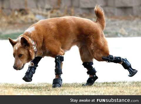 Dog found frozen to ground gets new legs