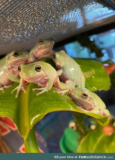 Froggo Fun #277 - They're Planning a Heist