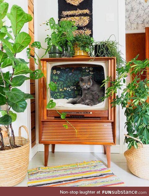 Repurposed TV used as a cat chillatorium