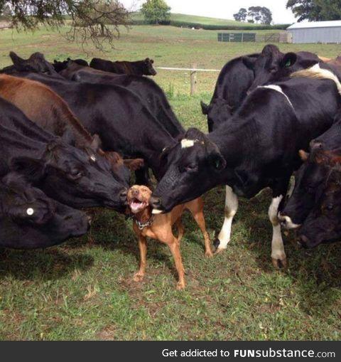 Doggo loves moo moo kisses