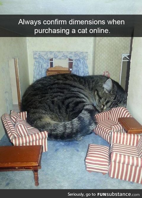 Always confirm dimensions when purchasing a cat online