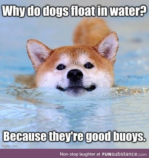 Dogs are cool