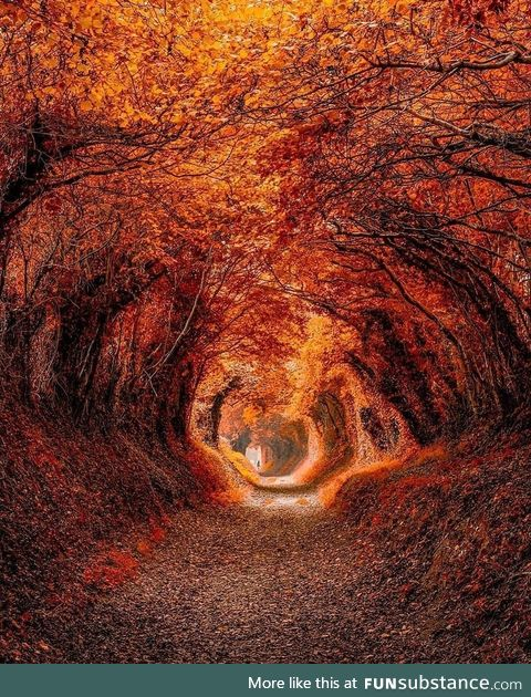 Enjoy a beautiful autumn day on the Roman Road in the city of Chichester ????????! One of